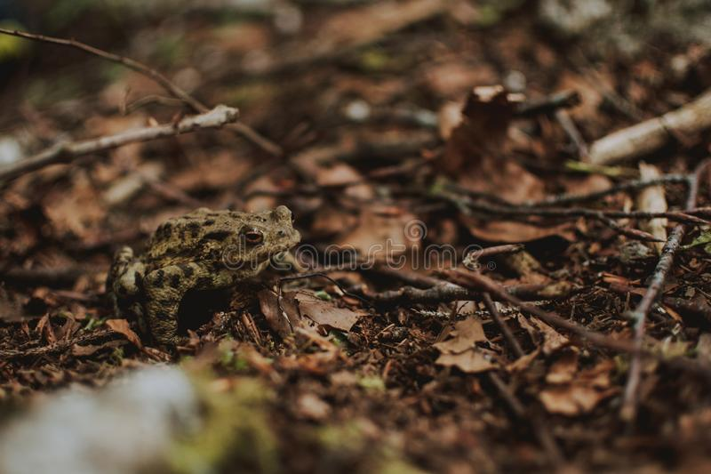 Closeup shot of a frog sitting on dry grass in a forest near a lake royalty free stock photos