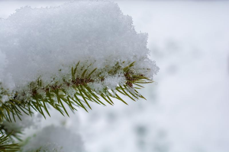 Fir covered by fresh snow royalty free stock photos