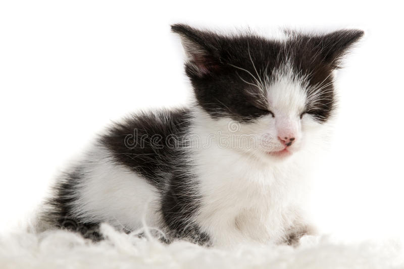 Closeup of a sleeping little kitten royalty free stock images