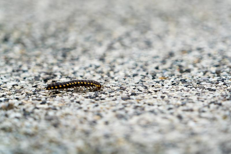 Closeup a small insect walking alone on the blur gravel surface stock image