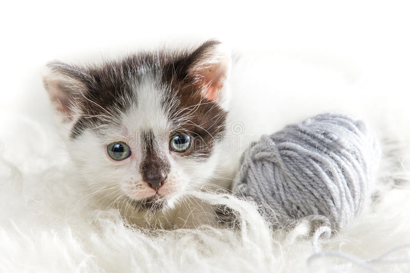 Closeup small kitten with hank royalty free stock photography