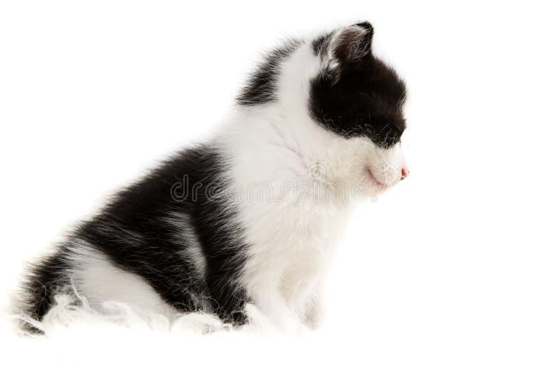 Closeup small kitten isolated stock photo