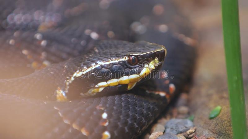 Closeup of snake head and eye as it slithers on ground stock photography
