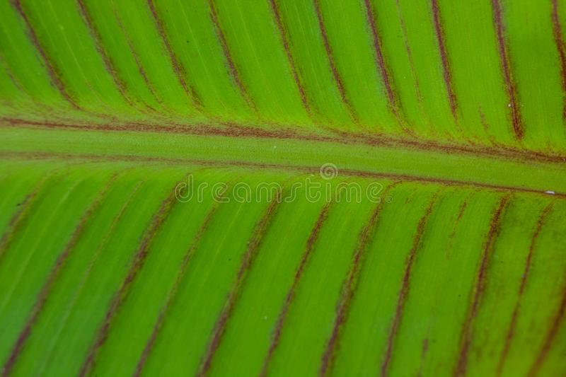 Solf background venation patterns of green leaf stock photography