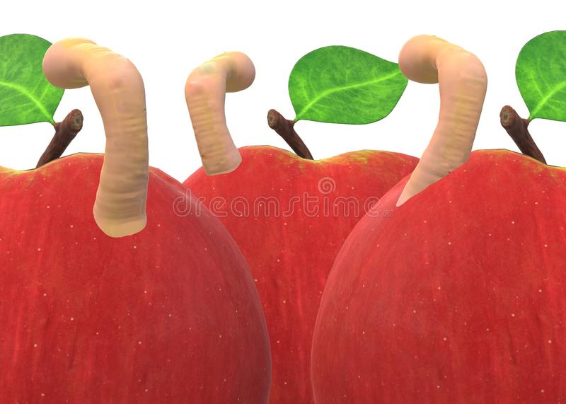 Closeup of some red apples infested with worms against a white backdrop stock image