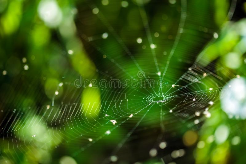 Spider web closeup with selective focus. Closeup of a spider web against foliage blurred background royalty free stock photo