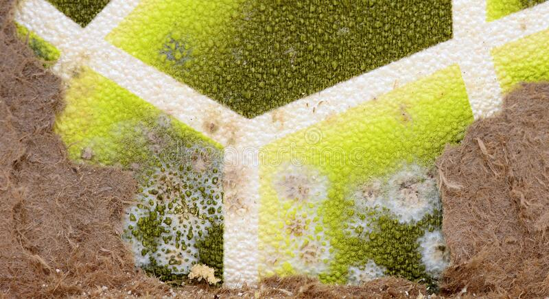 Spot mold on the wall royalty free stock image