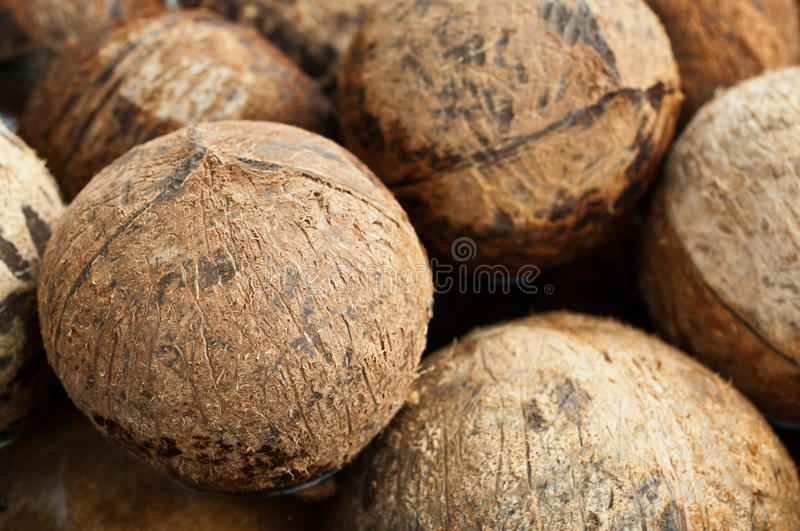 Download Closeup of stack coconut stock photo. Image of freshness - 33958106