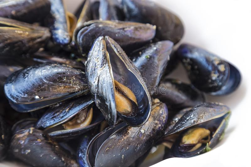 Closeup of steamed mussels, isolated on white background. Fresh from the sea, a mussel farm on the southern coast of Albania stock image
