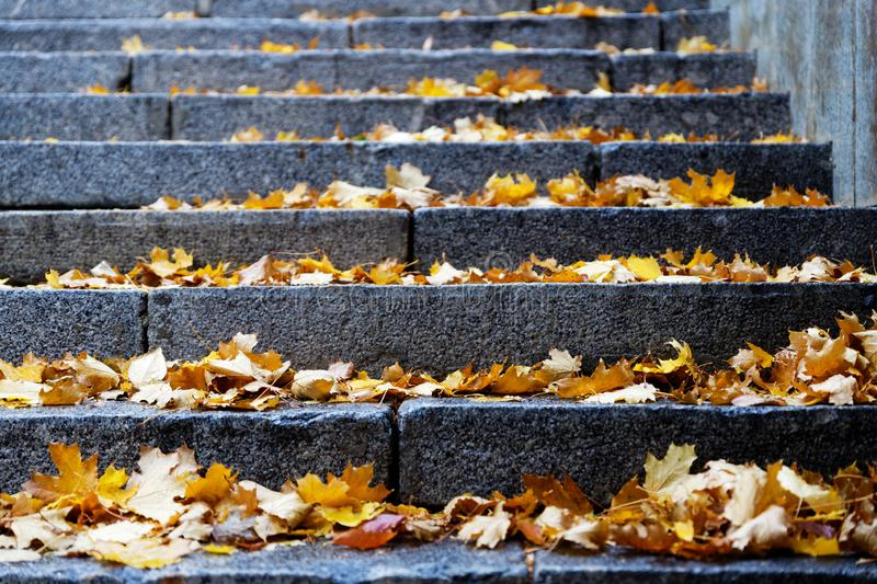 Closeup steps of stone stairway with yellow fall foliage. royalty free stock images