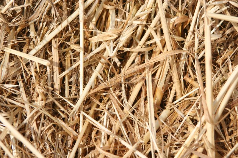 Closeup of straw texture surface stock image