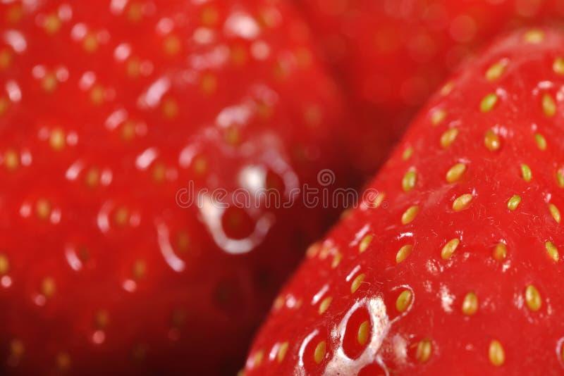 Closeup strawberry detail royalty free stock photo