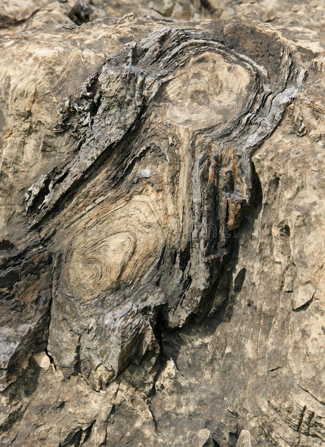 Closeup of Stromatolite in Salkhan fossil park. The Salkhan stromatolite fossils date back to Meso-Proterozoic period around 1400 million years old stock photography