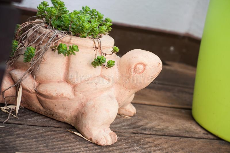 Succulent plant in terra cotta pot in shaped turtle. Closeup of succulent plant in terra cotta pot in shaped turtle on wooden terrace royalty free stock image