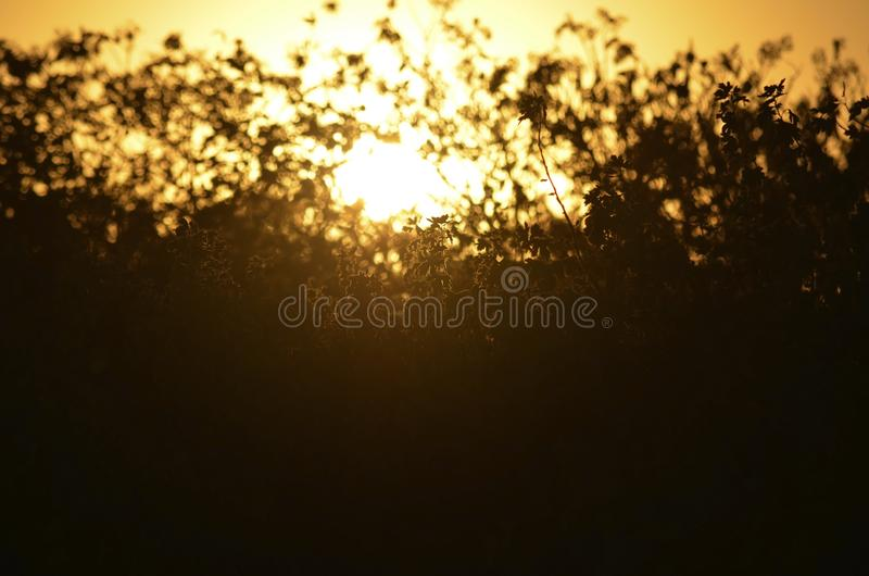 The summer sunset breaks through the bushes and grass. Closeup of a summer sunset through a dense wall of bushes and grass. Orange dark background royalty free stock photos