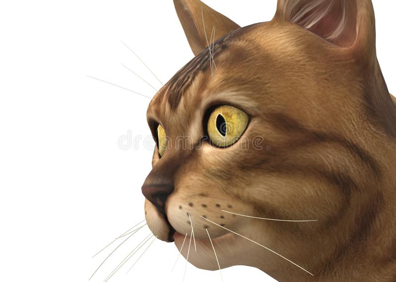 Closeup of a tabby cat kitten against a white backdrop stock photography