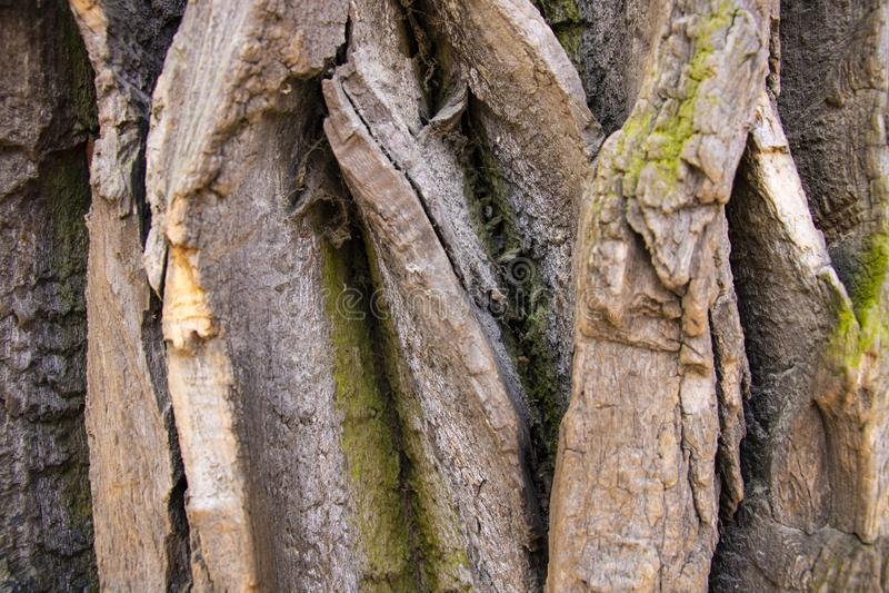 Closeup of texture background of an old oak tree bark stock photos