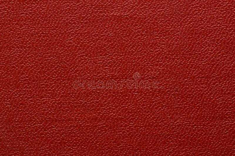 Closeup texture of skin. stock images