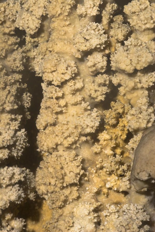 Download Closeup Of Texture On Stalactites Royalty Free Stock Photo - Image: 11845975