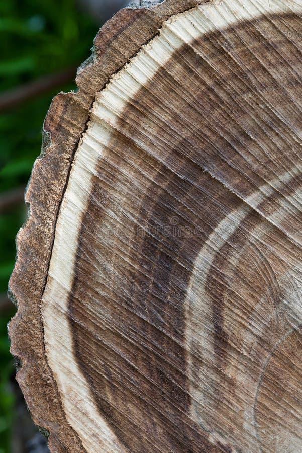 Closeup texture of walnut logs royalty free stock photography