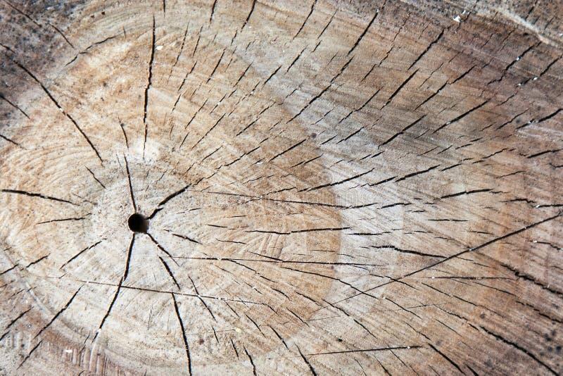 Closeup texture of walnut logs stock images