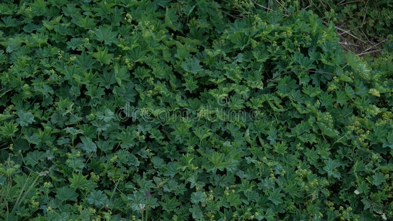 Closeup of thick greenery shot from above royalty free stock photography