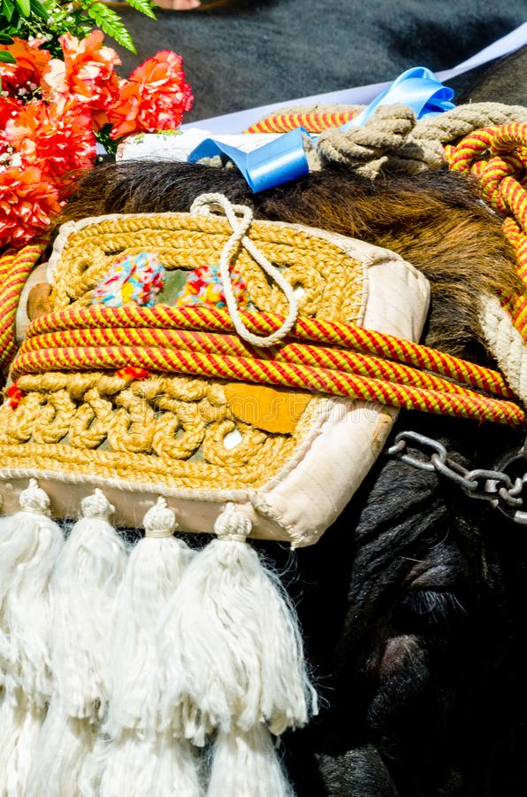 Closeup to the head of an ox decorated with traditional decoration, livestock. Agriculture royalty free stock photo