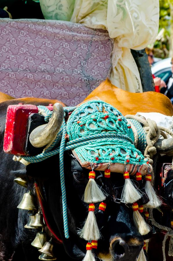 Closeup to the head of an ox decorated with traditional decoration, livestock. Agriculture royalty free stock photos