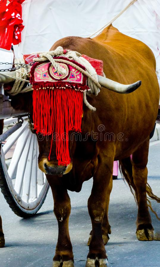 Closeup to the head of an ox decorated with traditional decoration, livestock. Agriculture stock photos