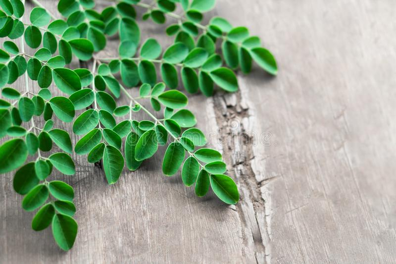 Closeup top view moringa leaves branch on wood background, herb and medical concept stock images