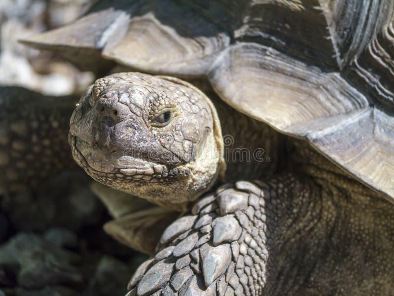 Closeup of tortoise stock photo