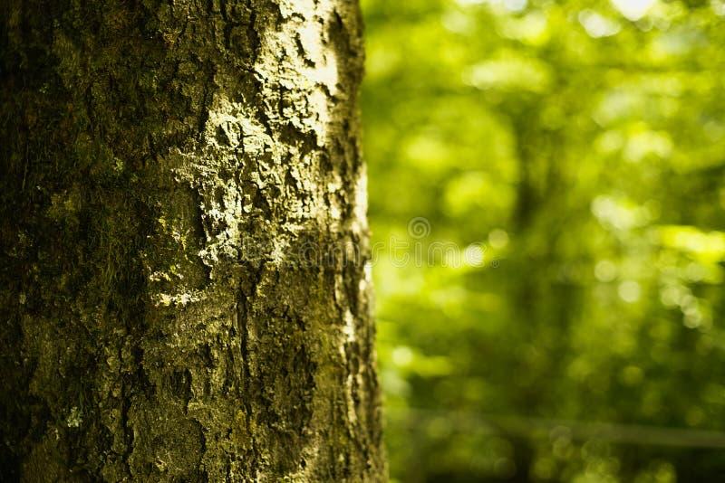 Closeup of tree bark stock photo