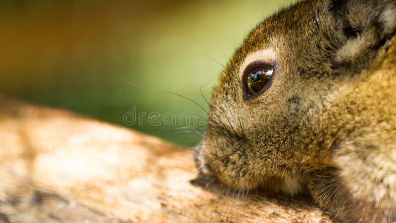 Closeup tree shrew stock photo