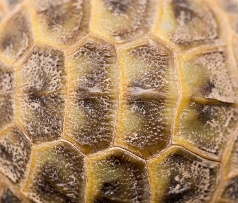 Closeup of a turtle shell. royalty free stock image