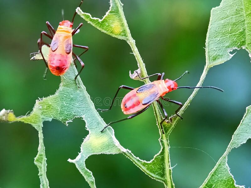 CloseUp of two insects stock photo