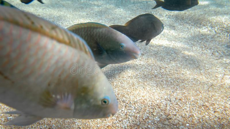 Closeup underwater photo of coral reef fishes swimming in the ocean next to the sandy sea bottom stock photos