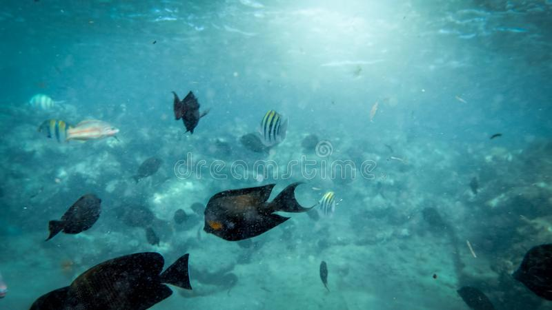Closeup underwater photo of coral reef fishes swimming in the ocean next to the sandy sea bottom stock images