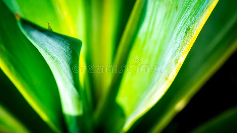Closeup of agave leaves stock photos