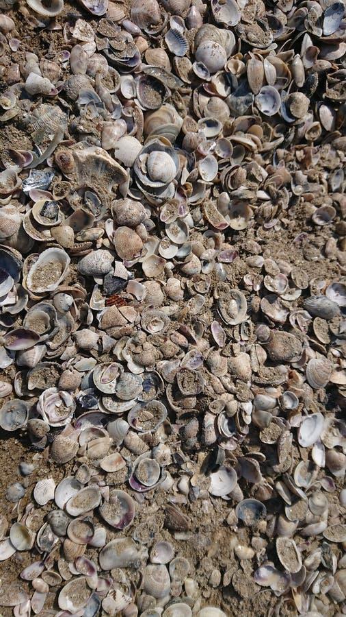 Sea Shells Beach royalty free stock image
