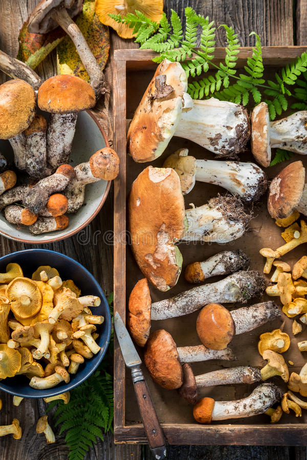 Various wild mushrooms straight from the forest. Closeup of various wild mushrooms straight from the forest stock photography