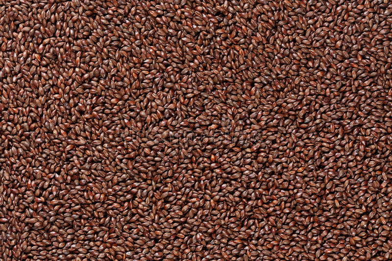 Closeup view of Barley Malt Grains. Ingredient for beer. Background texture. Ideal for commercial. Backdrop image stock image