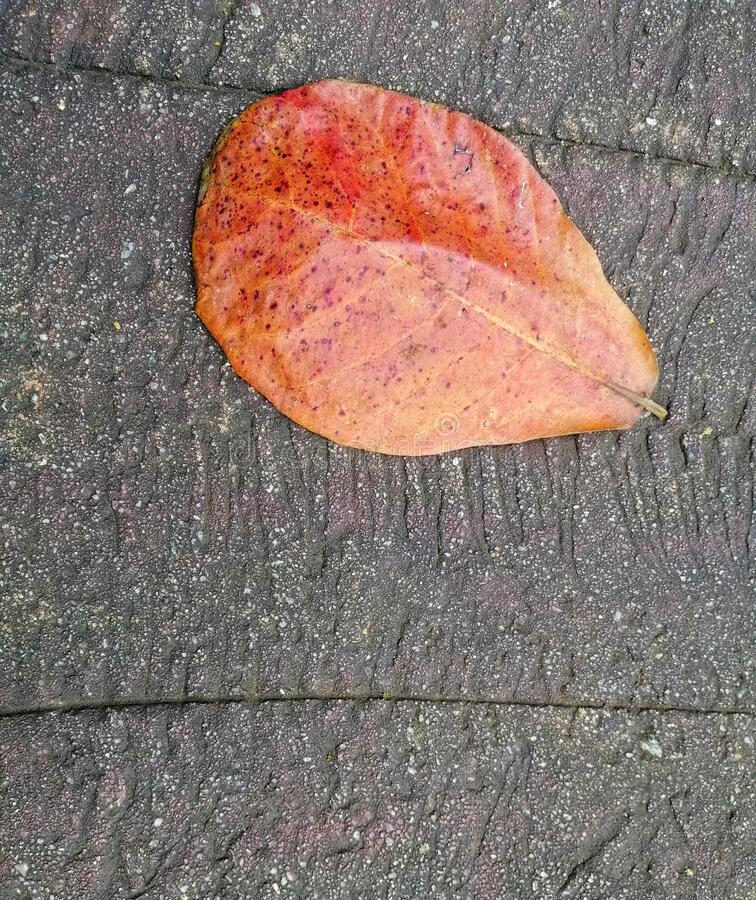 Closeup view of beautiful brown leaf on the cement floor. Background concept for art and quotes royalty free stock photo