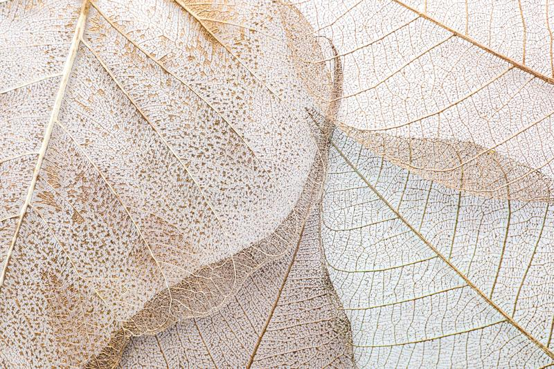 Closeup view of beautiful decorative leaves stock photography