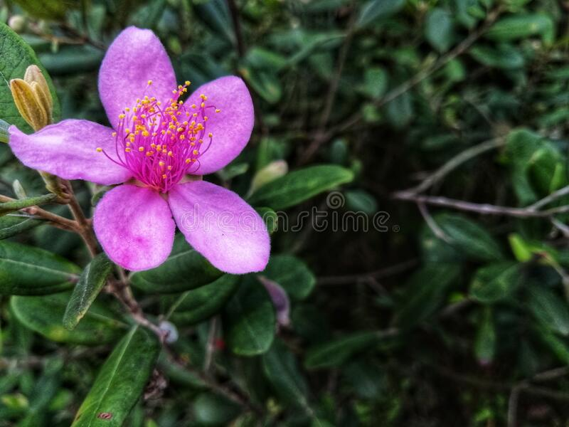 Closeup view of beautiful pink flowers at the garden. Floral background concept for art and quotes wallpaper stock image