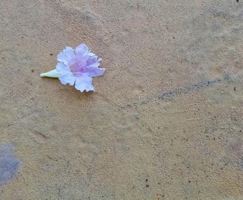 Closeup view of beautiful purple flower on the floor. Floral background concept for art and quotes wallpaper design royalty free stock photo