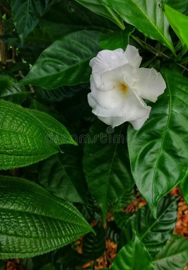 Closeup view of beautiful white colour of flower at the garden. Floral background concept for art and quotes wallpaper stock photography