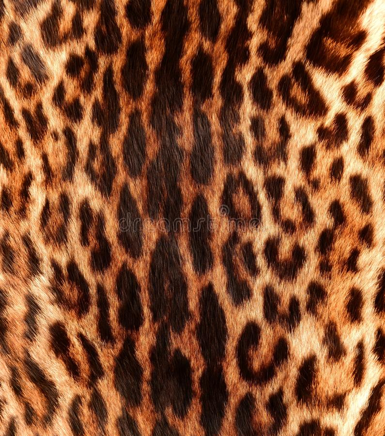 Detail of a ocelot skin royalty free stock photos