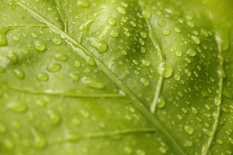 Closeup View of Green Leaf With Rain Drops royalty free stock photos