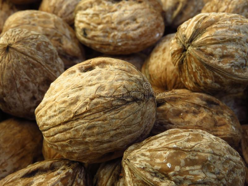 Closeup view of many walnuts. Walnut crop, harvest, production background. stock image