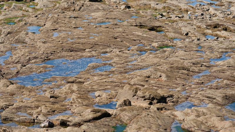Closeup view of rocks and water pools on seashore for backdrop. Closeup view of rocks and water pools on seashore for background royalty free stock images